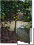 Egret by Pond  Duke Gardens  Durham  NC (Water Bird  Botanical Gardens  South)