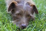 Dog in Grass  Close-Up (Cute Mix-Breed)