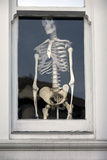 Human Skeleton in Window (Chiropractic Practice Display)