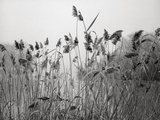 Prospect Park Lake With Grasses - Botanical Landscape Brooklyn