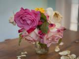 Fading Garden Roses