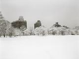 Prospect Park  Brooklyn In Snow - Prospect Park West Buildings