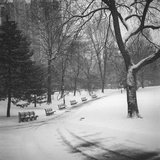 Central Park Benches - Central Park  NYC in Snow
