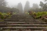 Stone Steps  Joaquin Miller Park  Oakland  CA (Urban Park  Fog)