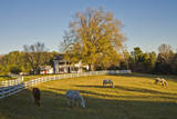 Four Horses Grazing in Front of White Picket Fence