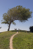 Point Isabel  CA (Dog Park)
