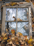 Window Frame and Autumn Leaves (Still Life  North Carolina)