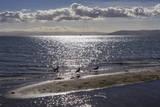 Seagulls on Sand Dune