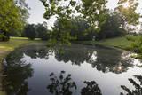 Woodland Pond Sunrise with Reflections