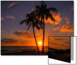 Palm Trees and Setting Sun, Kauai Hawaii Acrylique par Vincent James