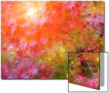 Japanese Maples in Autumn Design