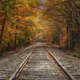 Autumn Tracks (Square)  New Hampshire