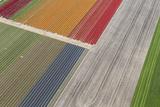 Fields of Colour II