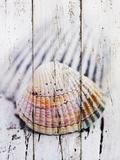 Nantucket Shells II