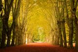 The Golden Arch Papier Photo par Philippe Sainte-Laudy