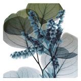 Lilly Of Eucalyptus 2 Reproduction d'art par Albert Koetsier