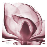 Magnolia Marcela