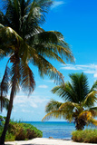 Access to the Beach Paradise - Florida - USA