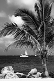 Paradise Palm Tree with a Sailboat on the Ocean - Florida