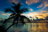 Silhouette of Palm Tree at Sunset Papier Photo par Philippe Hugonnard