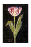 Twilight Tulip