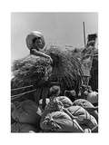 Young Female Colonist in Italian Libya During Grain Harvest  1930's