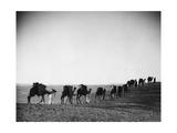Karawane in der Wüste  1933