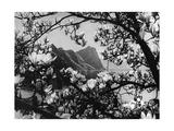 Blüten am Vierwaldstättersee  1934