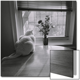 White Cat and Flowers by Window