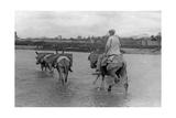 Mann mit Esel in Spanien  1934