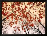 Red Maple and Autumn Sky