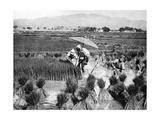 Reisbauern in China  1928