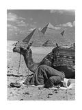 Gebet vor den Pyramiden von Gizeh  1942