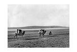 Dromedar-Karawane in der Türkei  1960er Jahre
