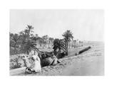 Dromedar in Tunesien  1926