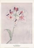 Lys Reproduction pour collectionneurs par Piet Mondrian