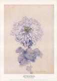 Chrysanthème Reproduction pour collectionneurs par Piet Mondrian
