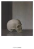 Schadel (Skull)