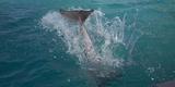 Dolphin Tail Splash
