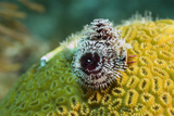 Sea Urchin on Coral Reef