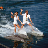 Vintage Dolphin Show