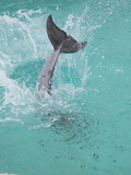 Dolphin Tail Splash
