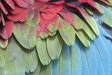 Colorful Bird Feathers