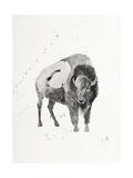Watercolor Buffalo Giclée par Ben Gordon
