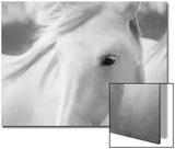 Sweet Horse Acrylique par Marco Carmassi