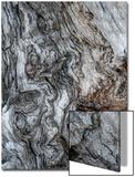 Ancient Bark Acrylique par Doug Chinnery