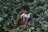 Child of a Migratory Farm Laborer in a Cabbage Garden  Texas  Jan 1942