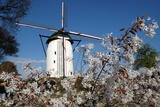 Windmill in Walbeck  Germany
