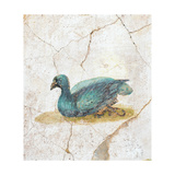 Blue Feathered Duck  C 10-45