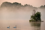 The River Oder in the Fog  with Two Swans